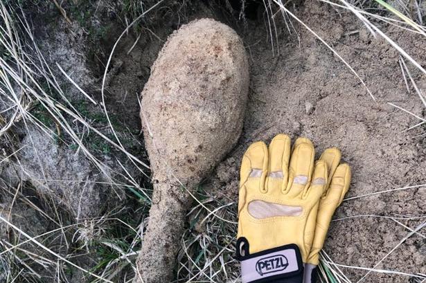 Royal Navy EOD claim device found on Hayle beach is a World War Two Spigot Mortar round (Image: Portreath HM Coastguard team)
